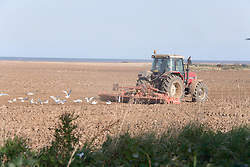 Farmer with tractor working field near the East Yorkshire coast; England