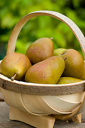 Pear 'Beurre Hardy' in a basket - Pyrus