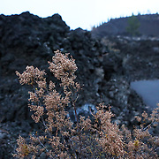 """The film adaptation of Cheryl Strayed's memoir, """"Wild,"""" stars Reese Witherspoon as a troubled woman who challenges herself by hiking the Pacific Crest Trail in Oregon. Newberry National Volcanic Monument in Bend, Ore., features trails winding through striking lava flows and foliage poking through the igneous rock."""