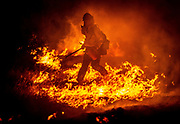 Cal Fire firefighter attacks the Sites Fire in Colusa County, Calif., overnight on August 2, 2020. The fire started at 4 p.m. Sunday. A rapid rate of spread caused the evacuation of several homes near Sites Lodoga Road.