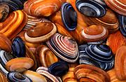 Shells New Zealand