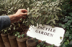 Tactile garden for people with visual impairments,
