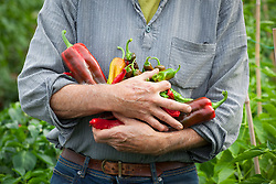 David Blake with armful of chillies