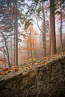 Orange leaves on a rock in the middle of a scenic, foggy forest on the romantic Road near Fussen, Germany