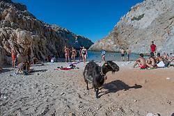 Goat, Seitan Limania Beach, Akrotiri, Chania, Crete, Greece