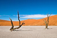 2 Dead Acacia Trees at Dead Vlei, near Sossusvlei, in the Namib-Naukluft National Park, Namib desert, Namibia