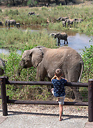 Young boy taking a look at the African elephants (Loxodonta africana) that feed in the marsh land  in Kruger NP, South Africa.
