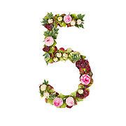 The number Five Part of a set of letters, Numbers and symbols of the Alphabet made with flowers, branches and leaves on white background