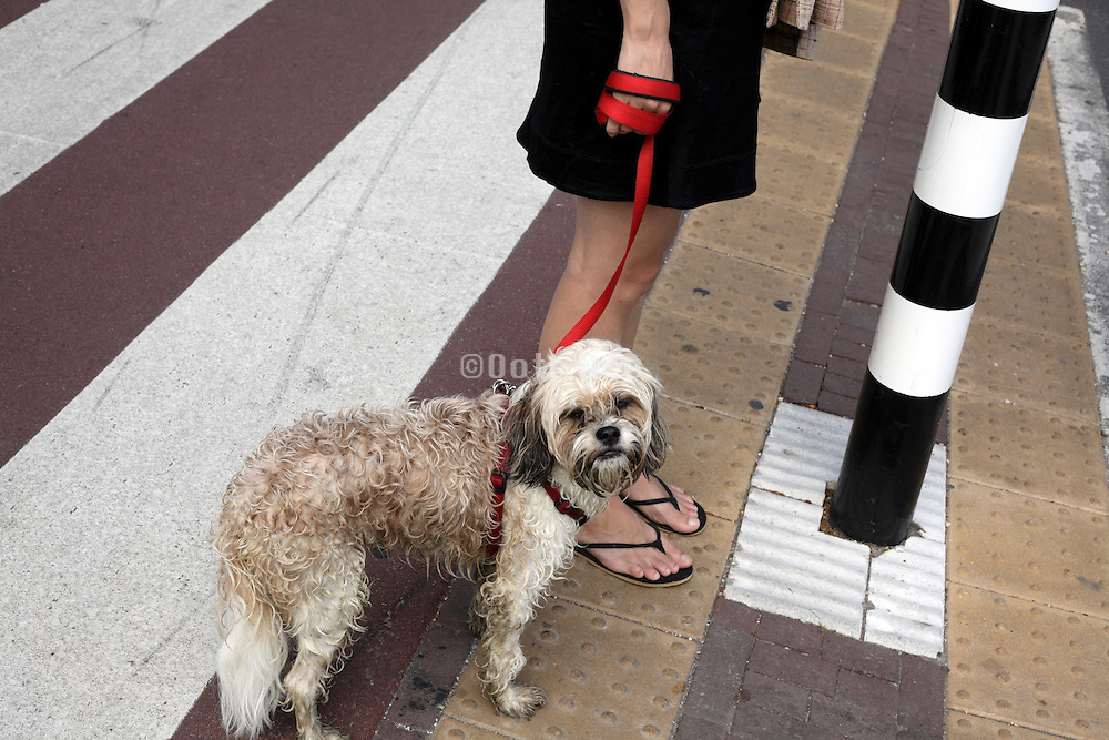 woman walking her dog Amsterdam Holland