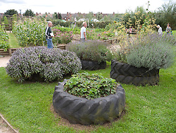 Tyres used as planters at Meadows Community Gardens, Nottingham, England