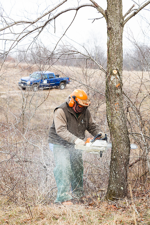 In the winter, volunteers are busy removing the weedy and the exotic tree species so that the native shrubs and trees can establish.
