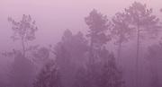 Bushfire morning haze, Portugal