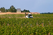 A view over the vineyard of Chateau Latour with the winery building and the chateau and a tractor working the soil, Pauillac, Medoc, Bordeaux Pauillac Medoc Bordeaux Gironde Aquitaine France