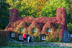 © Licensed to London News Pictures. 21/09/2020. Llanrwst UK. People pose for photographs with The Virginia Creeper that covers the Tu Hwnt I'r Bont tea room in Llanrwst in Wales has turned bright red the day before Autumn in the UK. Photo credit: Andrew McCaren/LNP