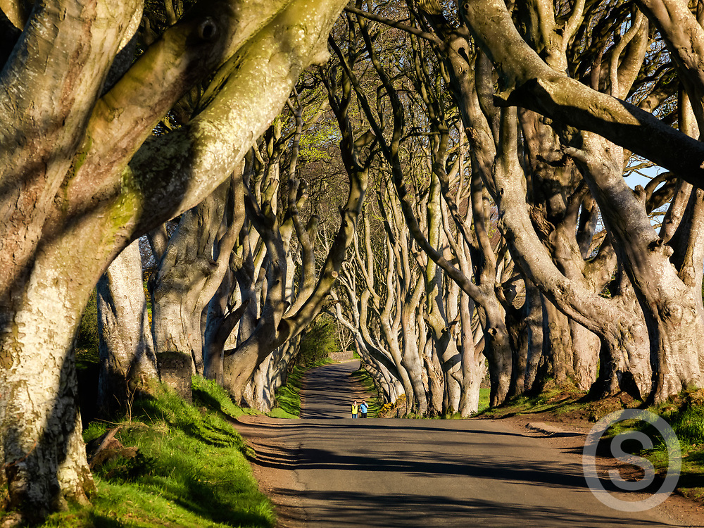Photographer: Chris Hill, Dark Hedges, County Antrim