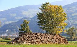 THEMENBILD - herbstlich gefärbter Baum vor einem Holzstapel an einem sonnigen Herbsttag, aufgenommen am 22. Oktober 2015, Mils, Österreich // autumnal colored tree on a sunny Autumn Day, Mils, Austria on 2015/10/22. EXPA Pictures © 2015, PhotoCredit: EXPA/ Jakob Gruber