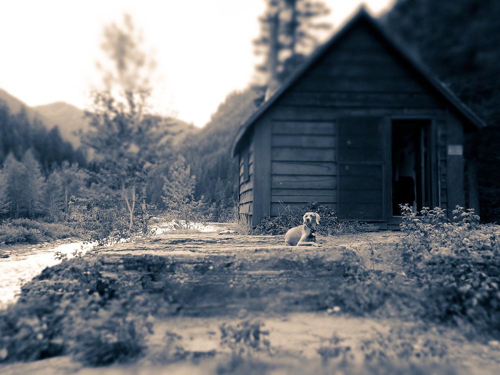 Sugar in front of Granite Cabin