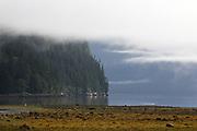 Sea Mist, British Columbia - Canada