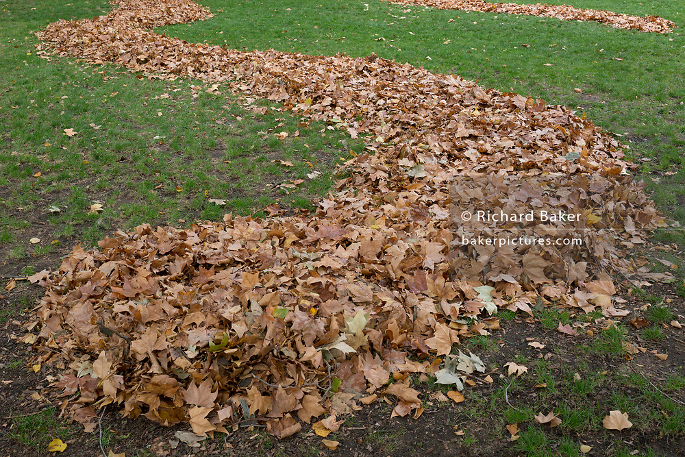 A tidy pile of autumn leaves gathered together in neat mounds in Russell Square Park, on 8th October 2018, in London, England.