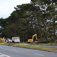 Fallen tree Mt Eliza