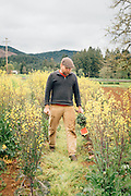 Andrew Still of Adaptive Seeds in Sweet Home, OR