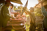dates being collected at harvest by farmers at sun rise in Arizona shot as a Environmental Portraiture on a Canon 5D Mark III