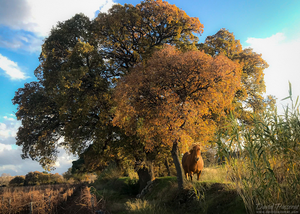 Horse under autumn oak, painting effect.