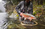 Spring treats us to a pristine hen rainbow on a wilderness river on the north island of New Zealand.