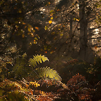 More from Sutton Heath at the weekend.