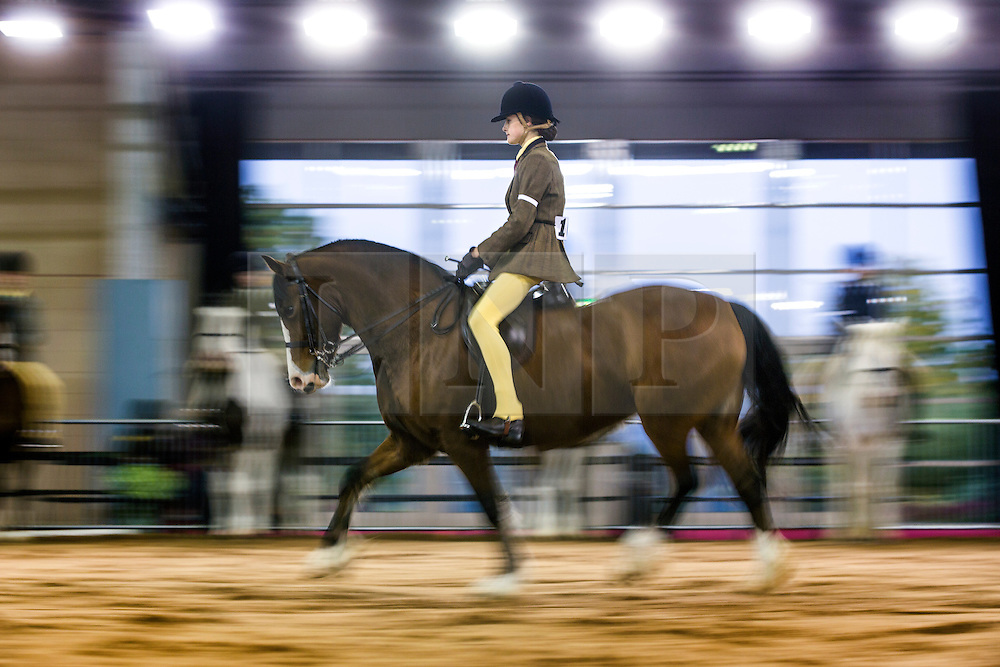 © Licensed to London News Pictures. 18/10/2015. Harrogate. A competitor rides her pony through the arena in the Home Produced Horse & Rider Championships at The 13th annual Countryside Live event at Harrogate show ground in Yorkshire. Photo credit: Andrew McCaren/LNP