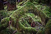 Moss covered trees and rocks by the Trail of Time, outside of Juneau, Alaska