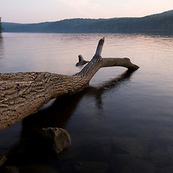 A fallen log in the Connecticut River in Hurd State Park in Haddam, Connecticuit.