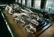 National Museum of Natural History in Paris, where modern paleontology began in the eighteenth century with Baron Georges Cuvier.