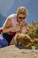Marmot (Marmota flaviventris) and hiker on top of Half Dome, Yosemite National Park, California