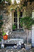 Exclusive story in English painter Carolyn Jordan's house in Eygalières, Provence, south of France.
