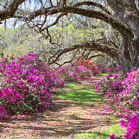 Lowcountry of South Carolina