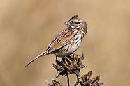 Songbirds (Passerines)