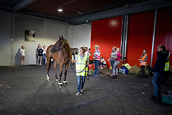 La Biosthetique Sam FBW<br /> Departure of the horses to the Rio Olympics from Liege Airport - Liege 2016<br /> © Hippo Foto - Dirk Caremans<br /> 30/07/16