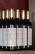 Bottles of Monte de Peceguina 2006. Drawing by Francesca. Herdade da Malhadinha Nova, Alentejo, Portugal
