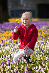 © Licensed to London News Pictures. 26/02/2021. Leeds UK. 5 Year old Scarlet plays in the crocuses at Temple Newsam park in Leeds this morning. Photo credit: Andrew McCaren/LNP