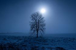 Sun, snow and tree, near Stoughton, Leicestershire, England, UK.<br /> © Ed Maynard<br /> mail@edmaynard.com<br /> www.edmaynard.com<br /> 07976 239803