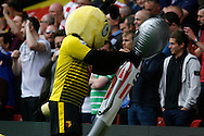 Harry the Hornet Watford mascot holding a Sunderland alien toy by its neck. Barclays Premier league match, Watford v Sunderland at Vicarage Road in Watford, London on Sunday 15th May 2016.<br /> pic by Steffan Bowen, Andrew Orchard sports photography.