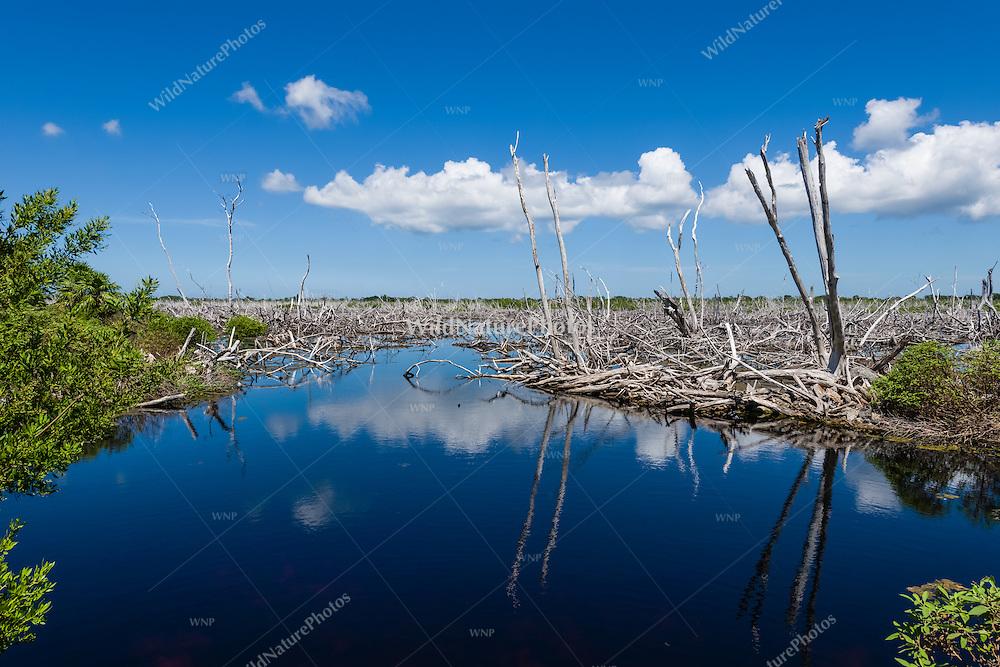 A coastal lagoon along the south shore of Guanahacabibes Peninsula, showing damage from Hurricane Ivan. Cuba.