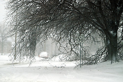01 December 2006: Fallen branches block most of this street in a subdivision on the east side of Bloomington.  A sharp winter storm swept into Central Illinois and the Bloomington-Normal area causing power outages, road closures, white out conditions, tree damage, and virtually every large business and schools to close.<br />