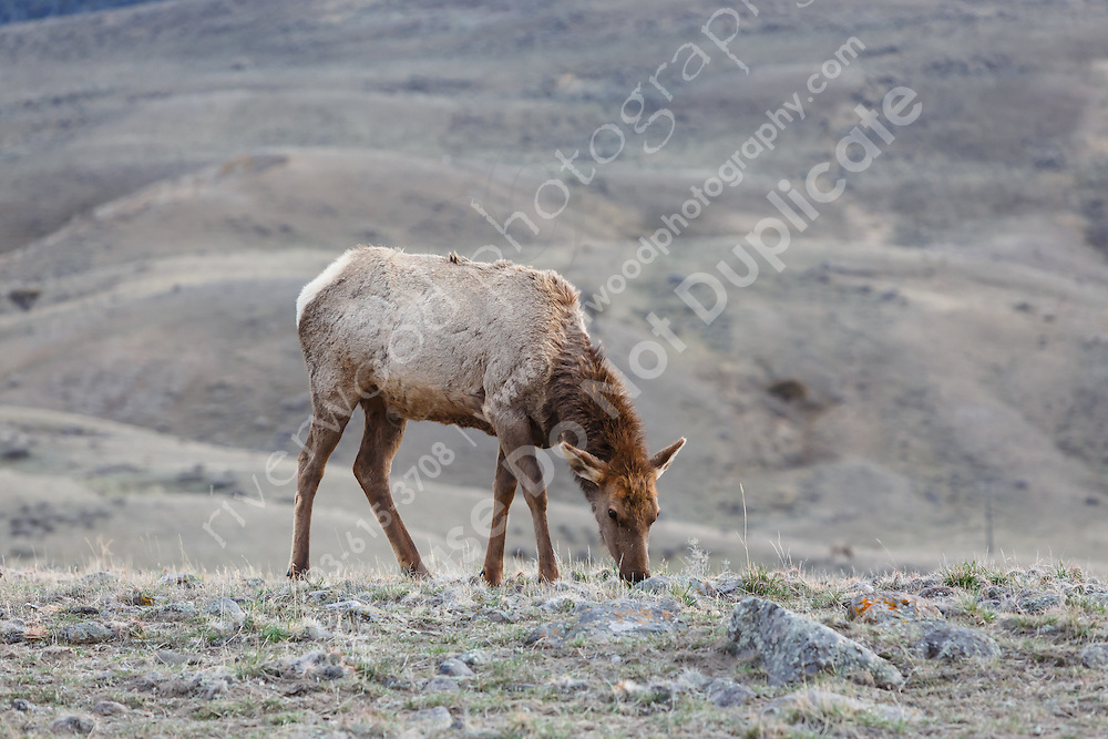 Near the Gardiner entrance to Yellowstone<br /> <br /> ©2015, Sean Phillips<br /> http://www.RiverwoodPhotography.com