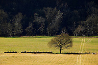 farm field for hay and hay bales with fence and water trough in rural Northern Arkansas next to a forest of trees