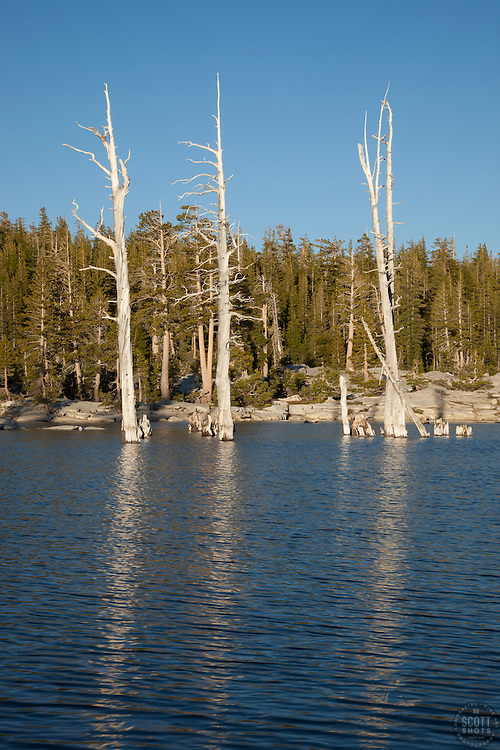"""Lake Aloha 13"" - Photograph of dead trees at Lake Aloha in the Tahoe Desolation Wilderness."