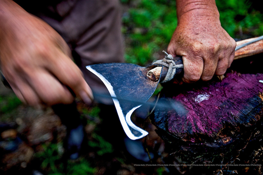 The machete used to harvest the cocoa pods must be extremely sharp and disinfected in order not to damage the buds.