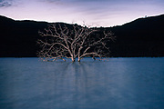 A tree rises from the bottom of Indian Valley Reservoir in rural Lake County, CA.  Indian Valley is one of many reservoirs too low and stagnant to support recreation, one of many benefits listed as justification for their construction.