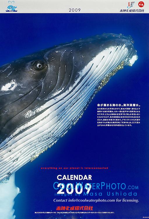 Akahokasei Corporation, year 2009 corporate calendar, cover use, Japan, Image ID: Humpback-Whale-0138